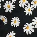 Daisy flora
